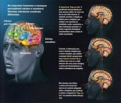 meditação e seus efeitos